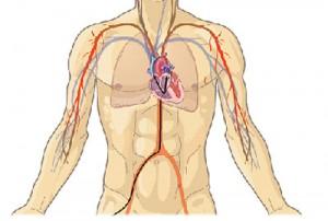 pulmonary-angiography